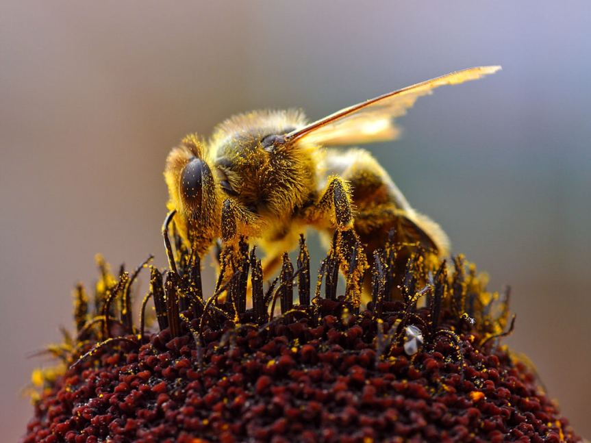 Beespotting on I-5 and the animal welfare approach to honey