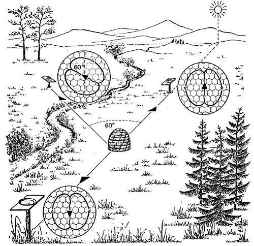 waggle_diagram