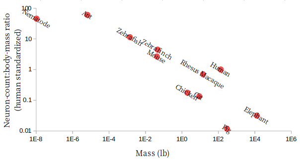 neuron-body-count-ratio-and-mass